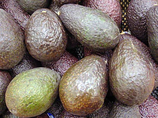 Image of Avocado Production