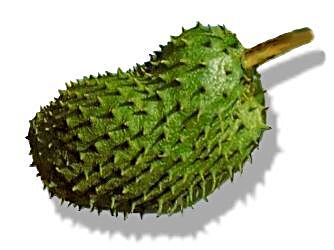 Image of Guyabano or Soursop Production