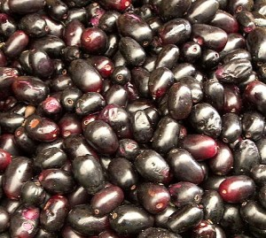 Image of Java Plum or Duhat Production