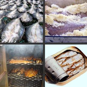 Image of Different Methods of Fish Processing