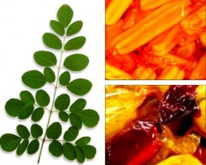 Image of How to Make Malunggay (Moringa) Pastillas and Polvoron