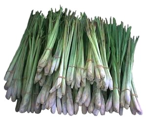 Image of Lemon Grass or Tanglad Production