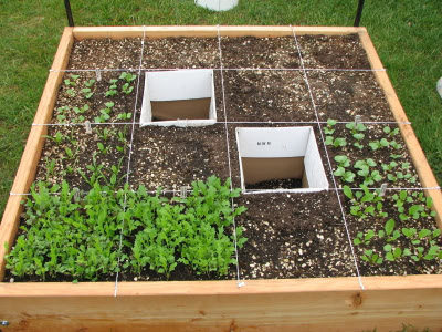 What is a square foot garden